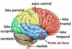 Resultado de imagem para ponto de Deus no cerebro