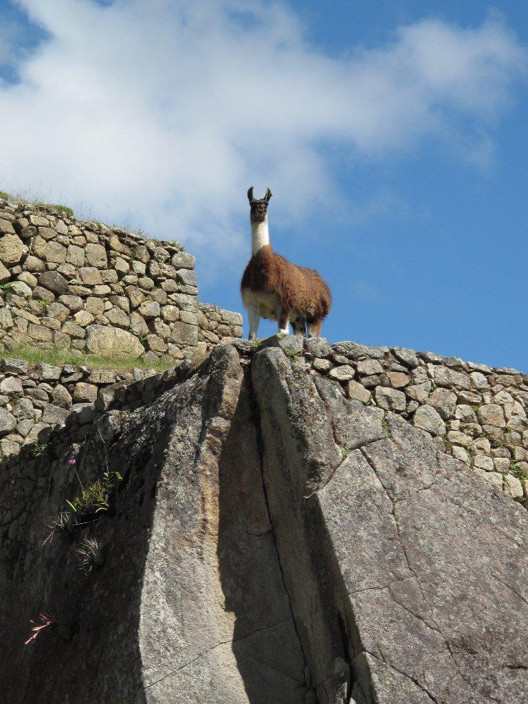 Gntnz S Big Adventure Photos Of Machu Picchu Peru Animals