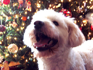 Moe in front of the tree
