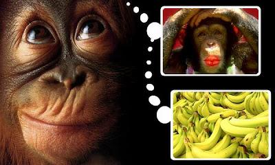 ¿en qué piensa un chimpancé?