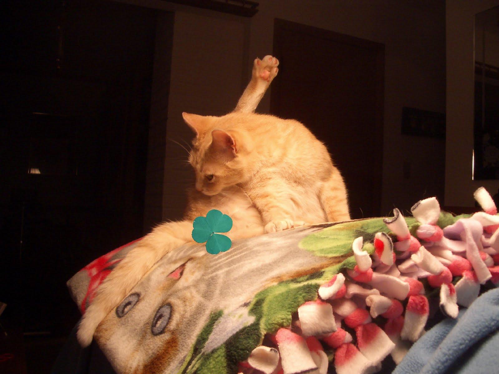 Avy S Cat Battler