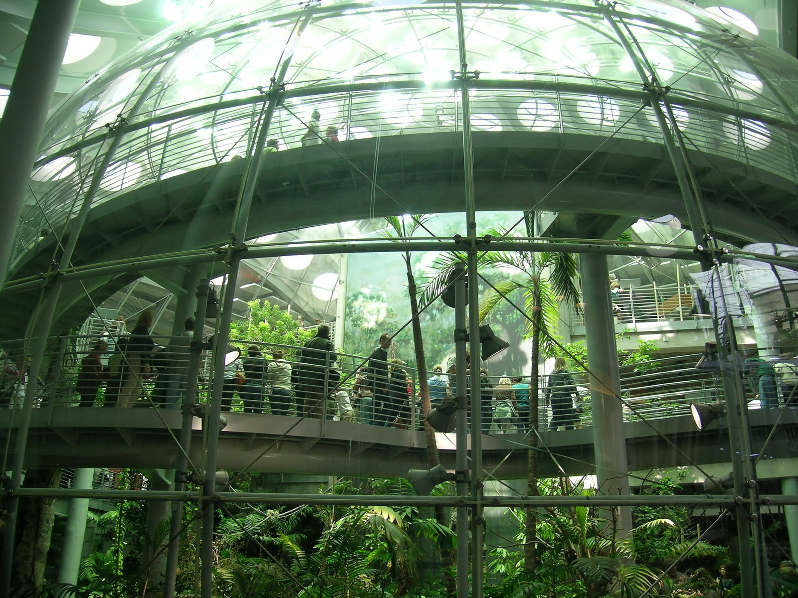 Frisco Kids Deal Of The Day California Academy Of