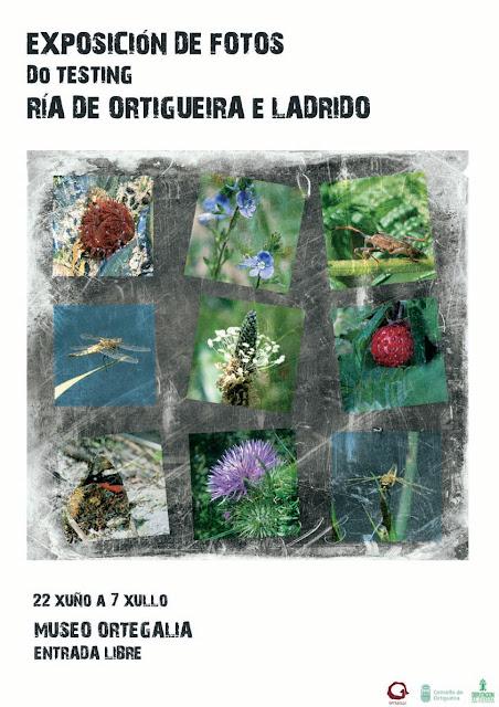 Testing Ría de Ortigueira y Ladrido