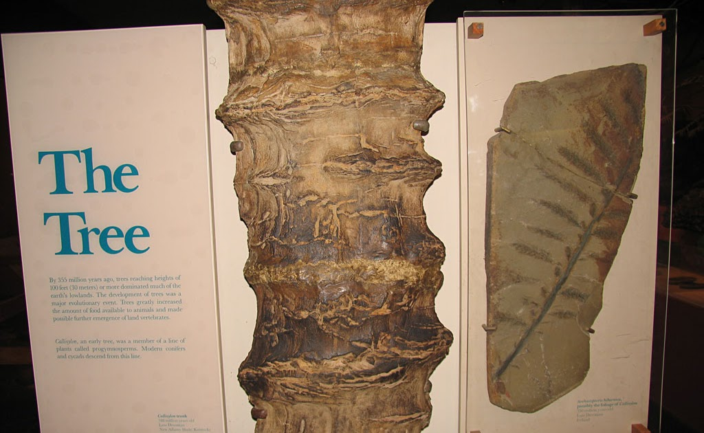 Louisville Fossils And Beyond Smithsonian S Quot The Tree Quot Fossil
