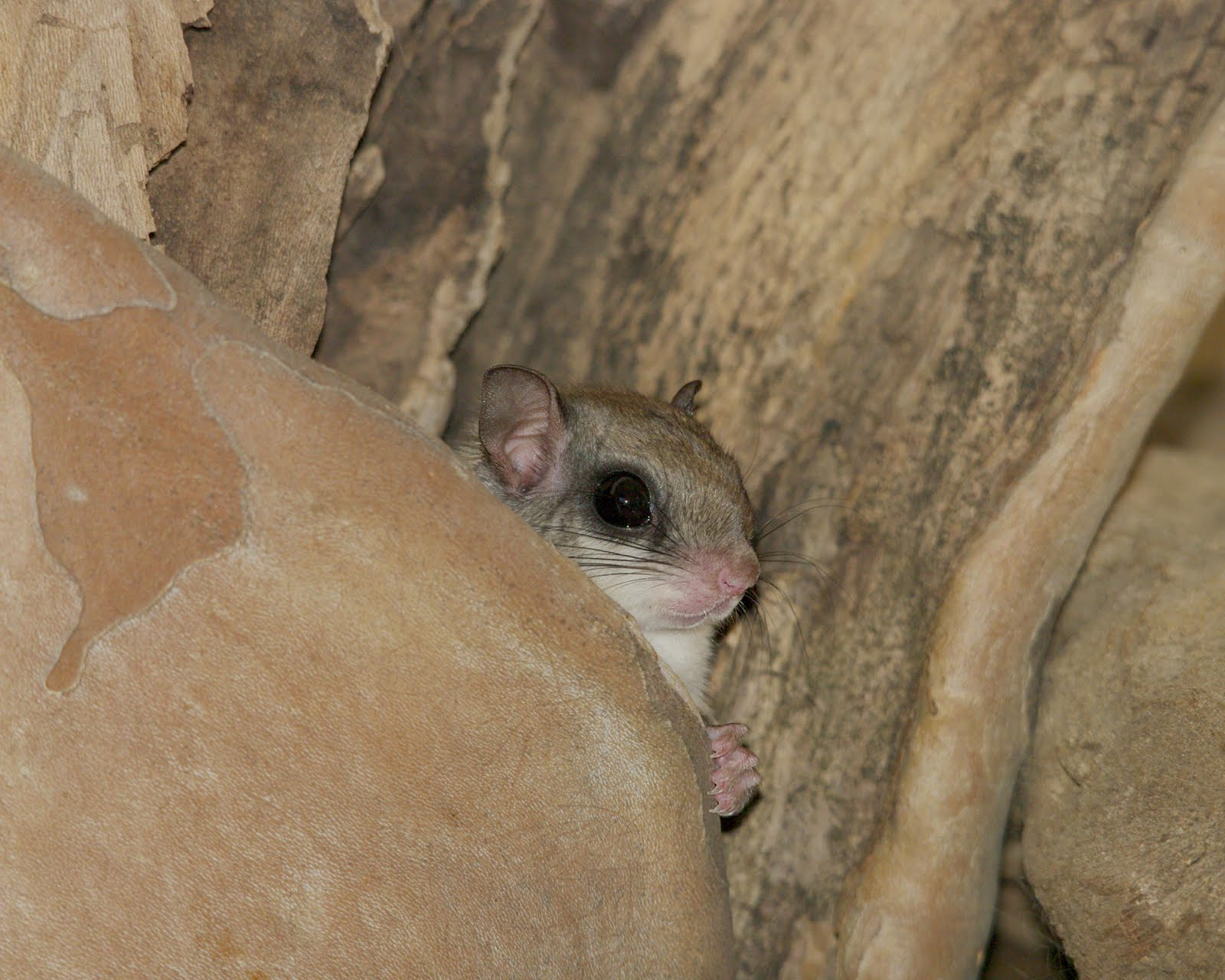 Indy Parks Nature Blog: Flying Squirrels