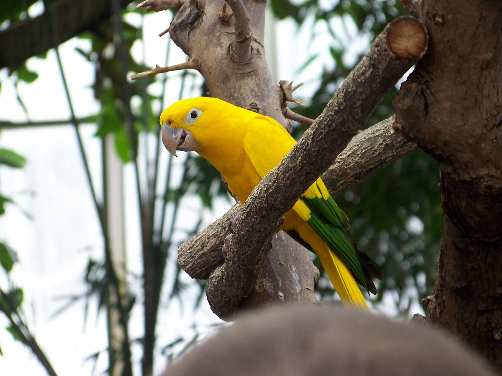 Rare Green And Yellow Quaker? - Quaker Parrot Talk ...