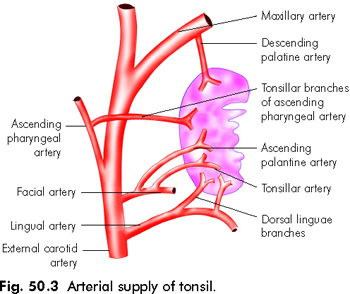 MEDICAL MNEMONICS: Tonsils: Blood supply