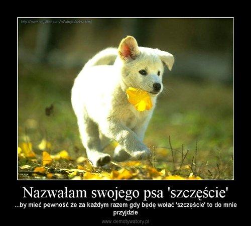 natur dla psów