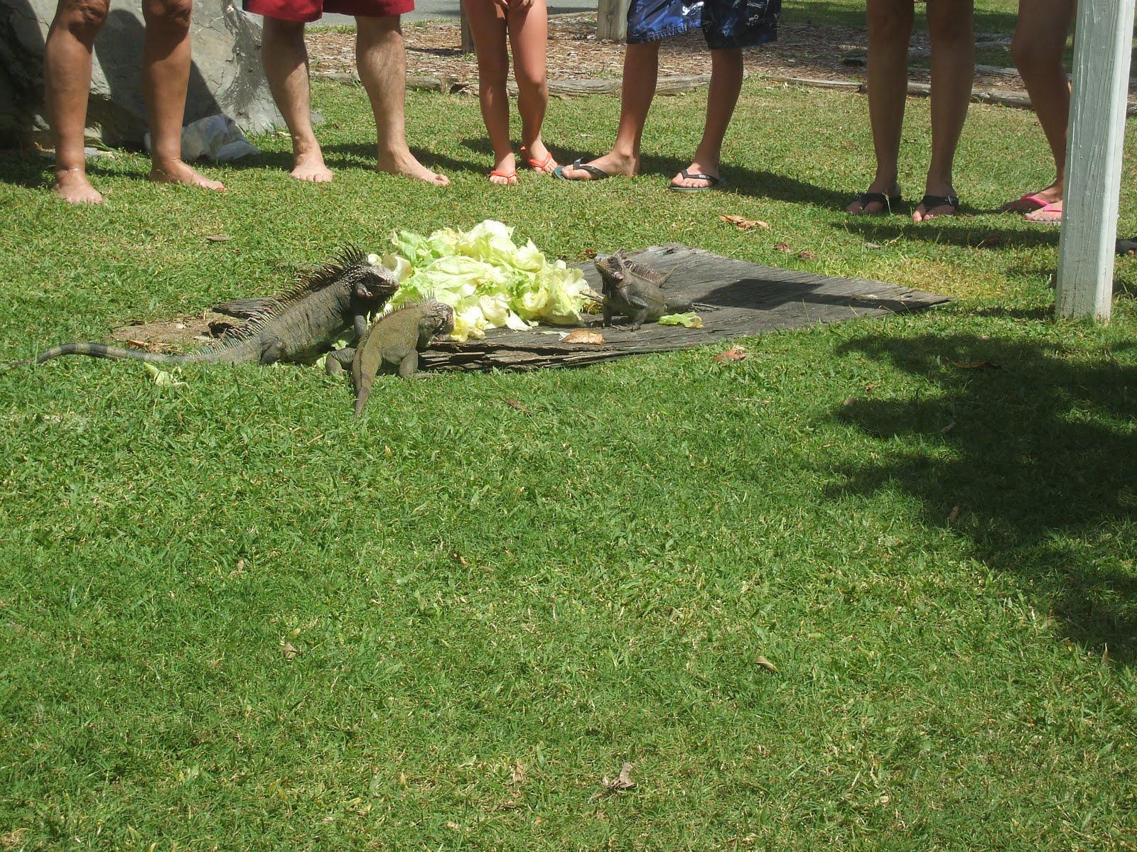 Farsighted Fly Girl St Thomas Iguana Adventure