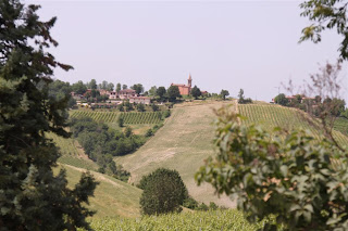 Bologna Vineyard