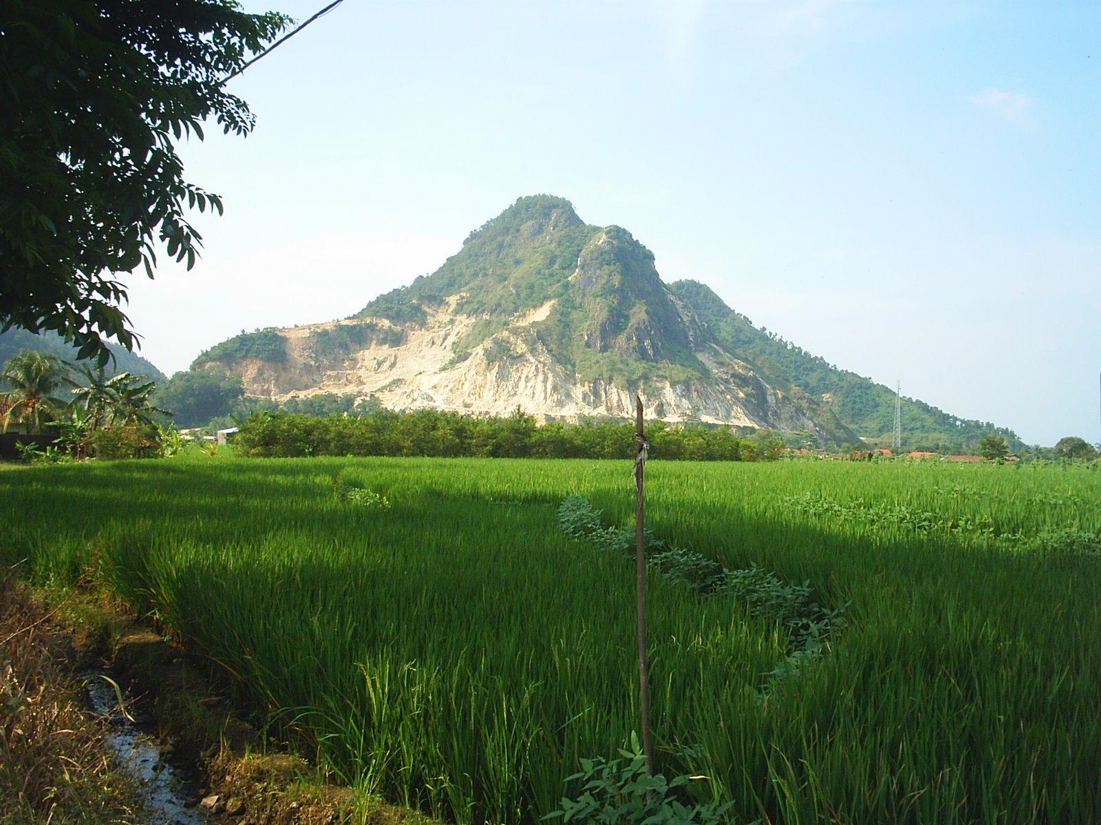 gambar pemandangan kampung - photo #24