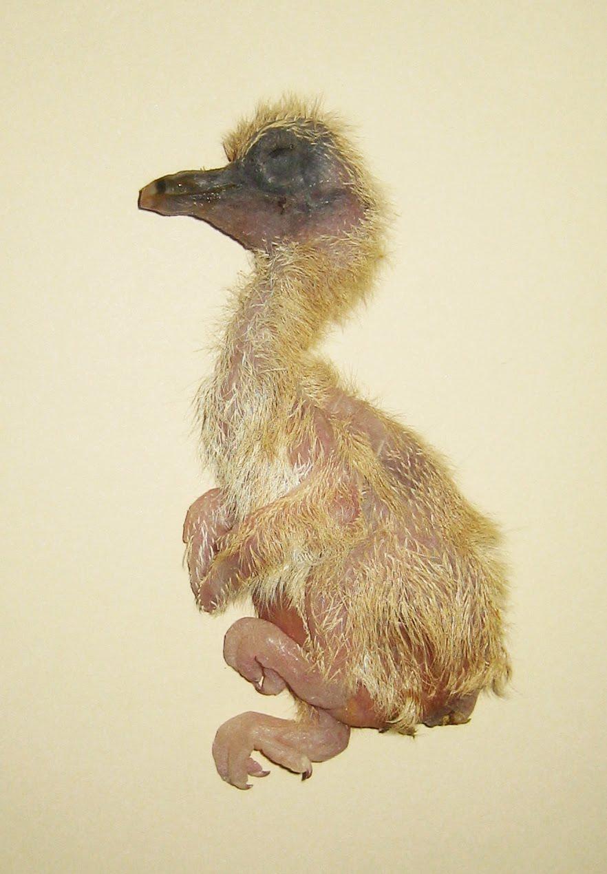 MustardPlaster: Dead as a Dodo