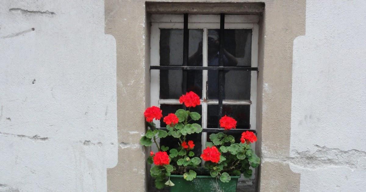 le maximum pot de fleur sur bord de fen tre photo et fond d 39 cran. Black Bedroom Furniture Sets. Home Design Ideas