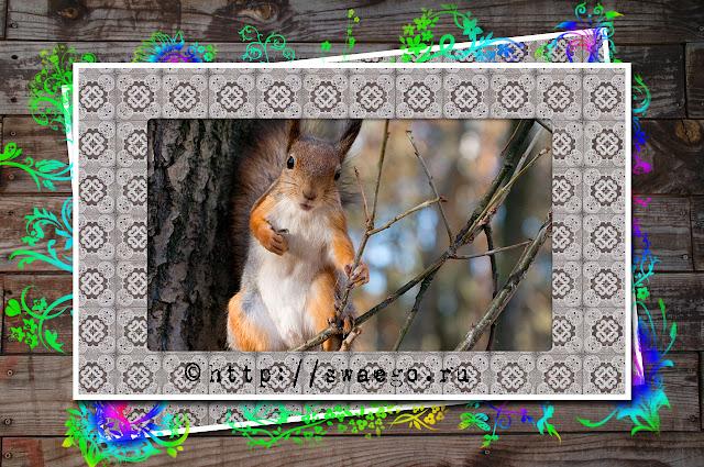 Создание рамки для фотографии.Скрапбукинг в Photoshop CS5.