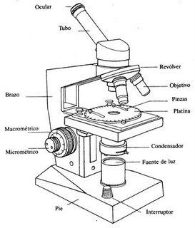 Ciencia Activa: Caza de Tesoros #1 El Microscopio
