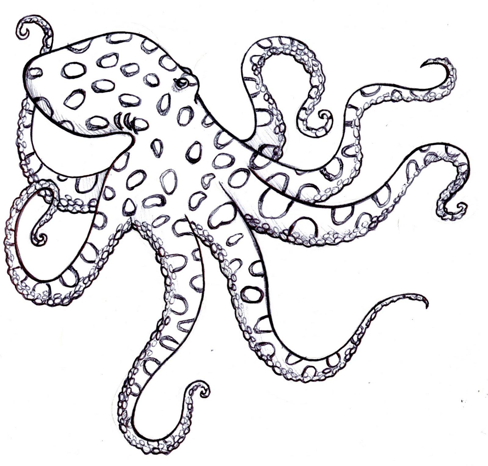 Lauren Magda Illustration Amp Design Octopi