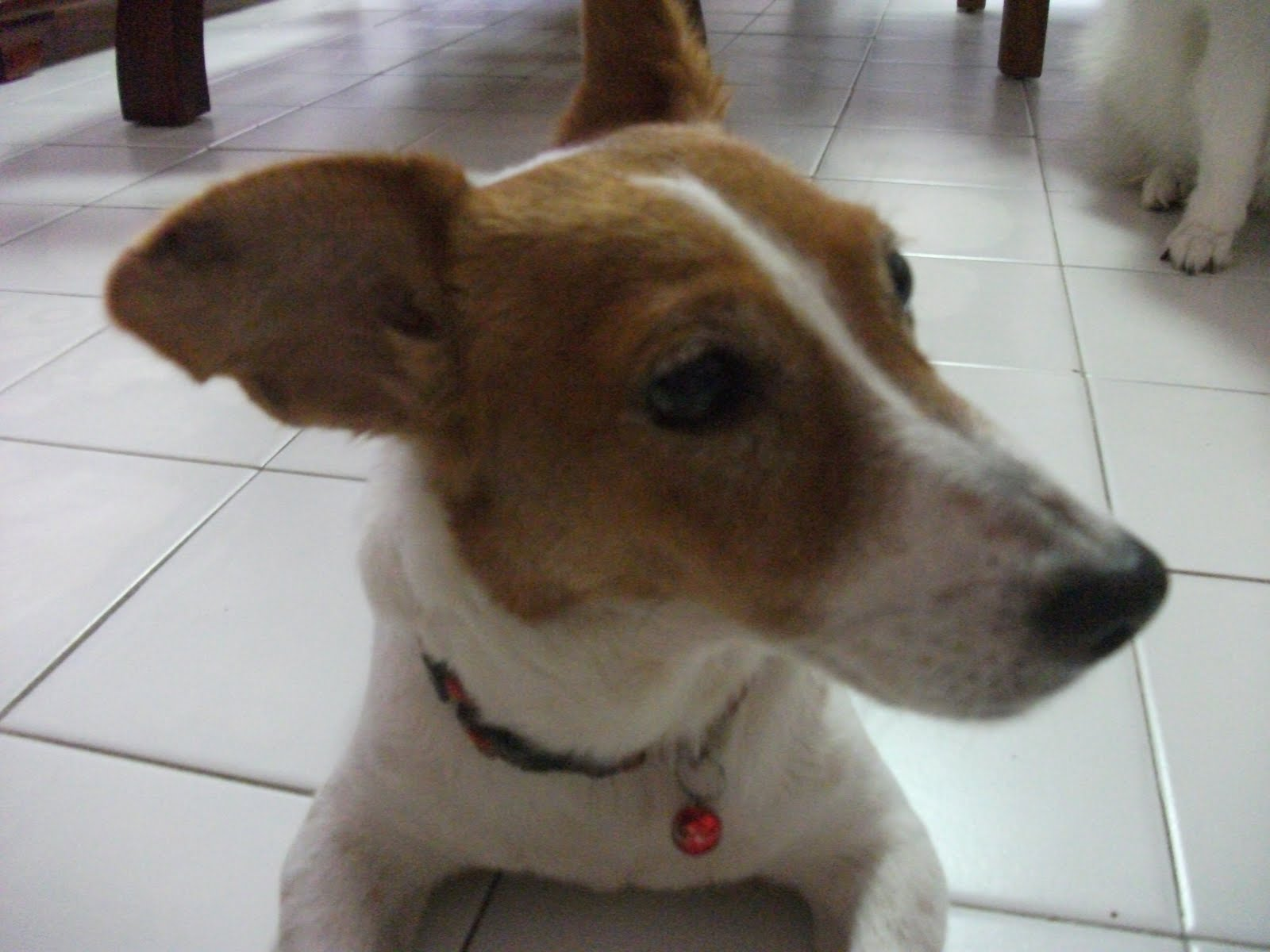 Most Aggressive Dog Breed Dog Training Home Dog Types