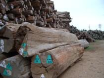 ビルマチークの原木
