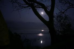 Moon Light in the Park