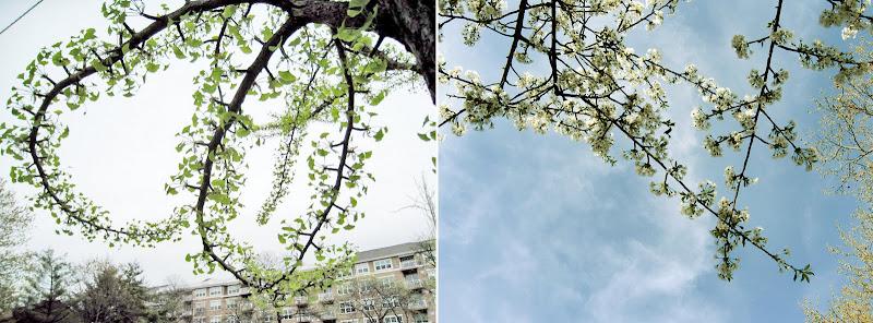 skywatch through trees