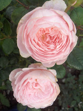 Queen of Sweden Austinros