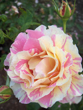 Claude Monet Melliand