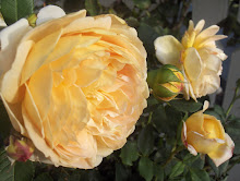 Golden Celebration Austinros