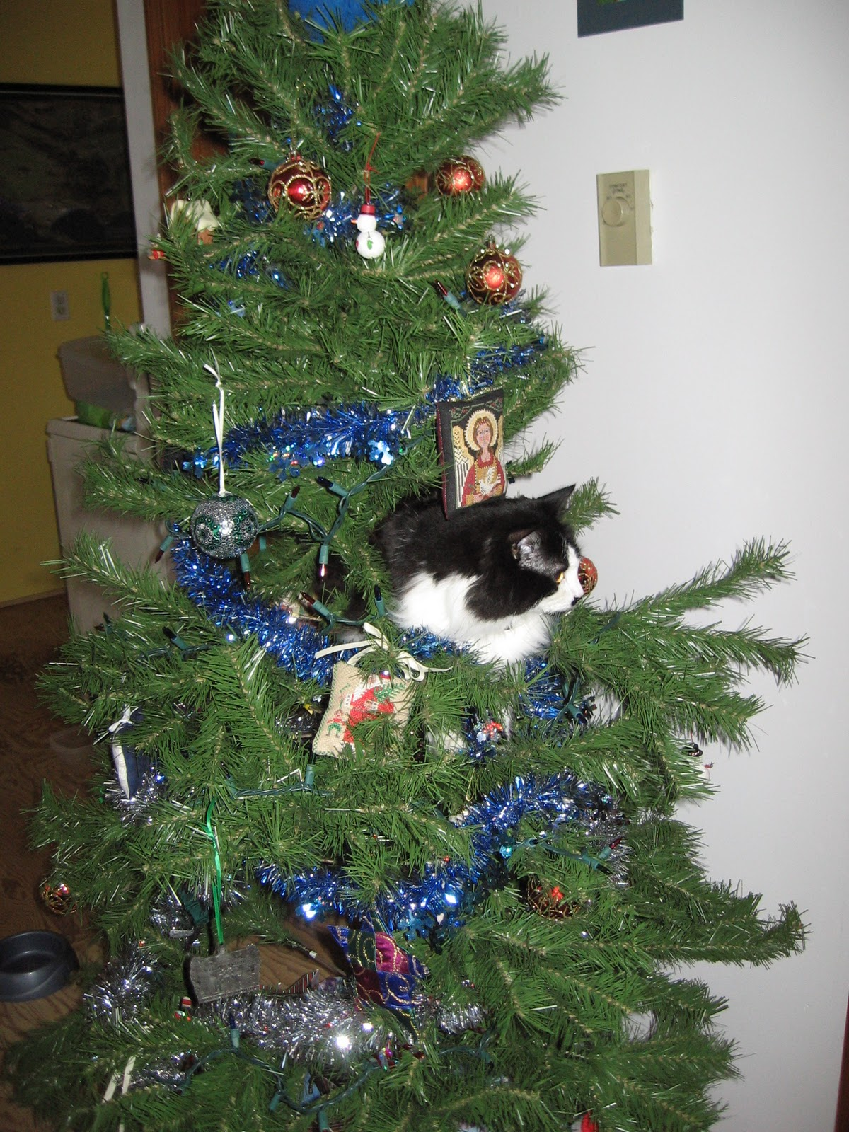 Christmas In July Cat Meme.What To Buy A Geologist For Christmas Georneys Agu