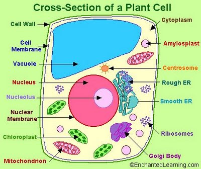 """The small but sexy side: """"PLANT CELL PROJECT FOR ELEMENTRY ..."""