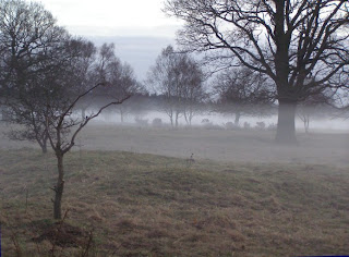 A misty field at dusk