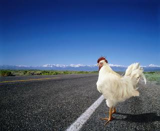 pollo_carretera.jpg