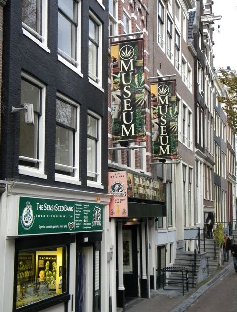 Travel to the Netherlands: Hash  Marihuana   Weed   Cannabis