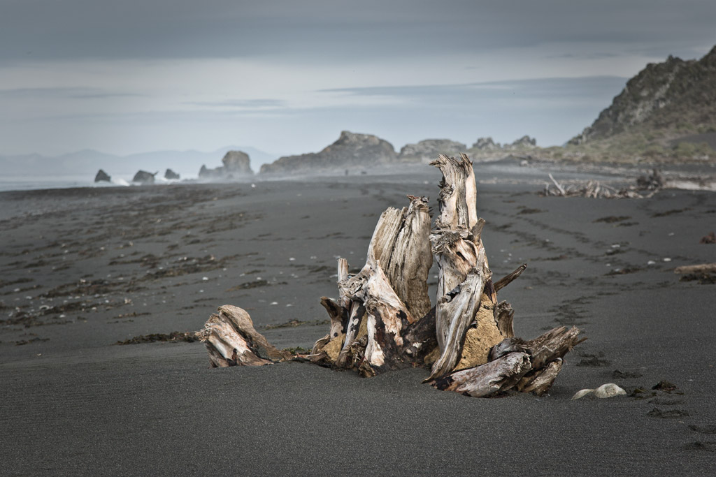 Driftwood stump, Baring Head