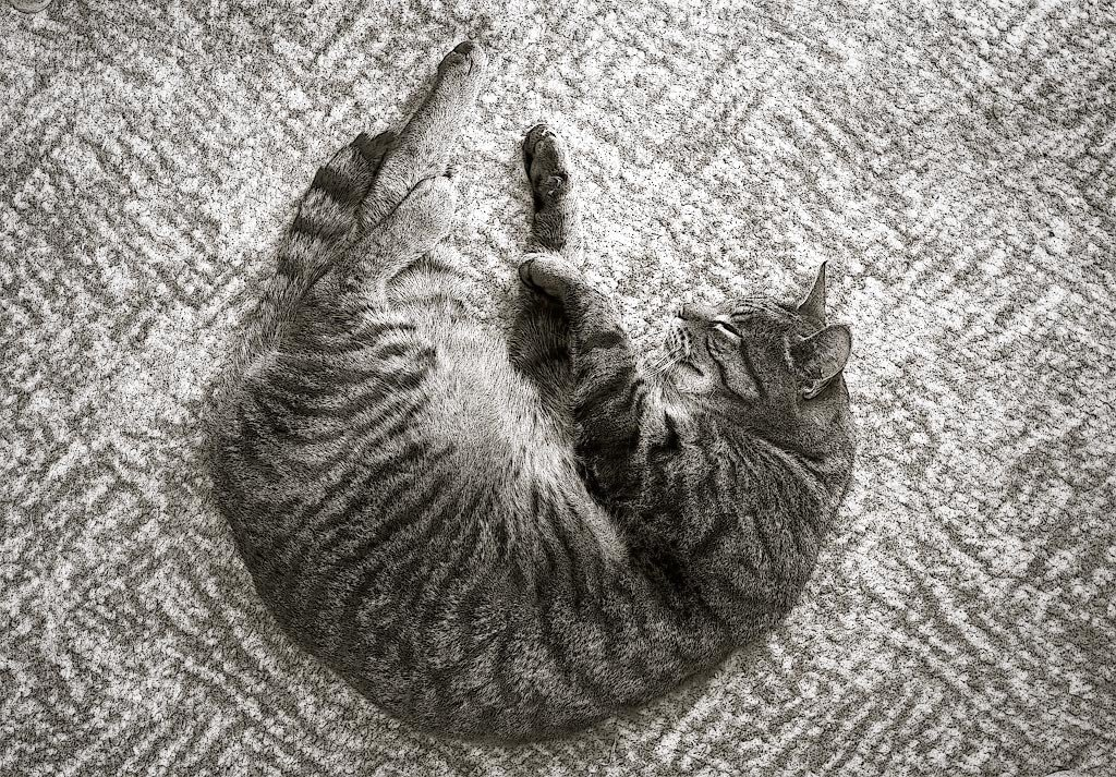 Jimmy asleep on carpet