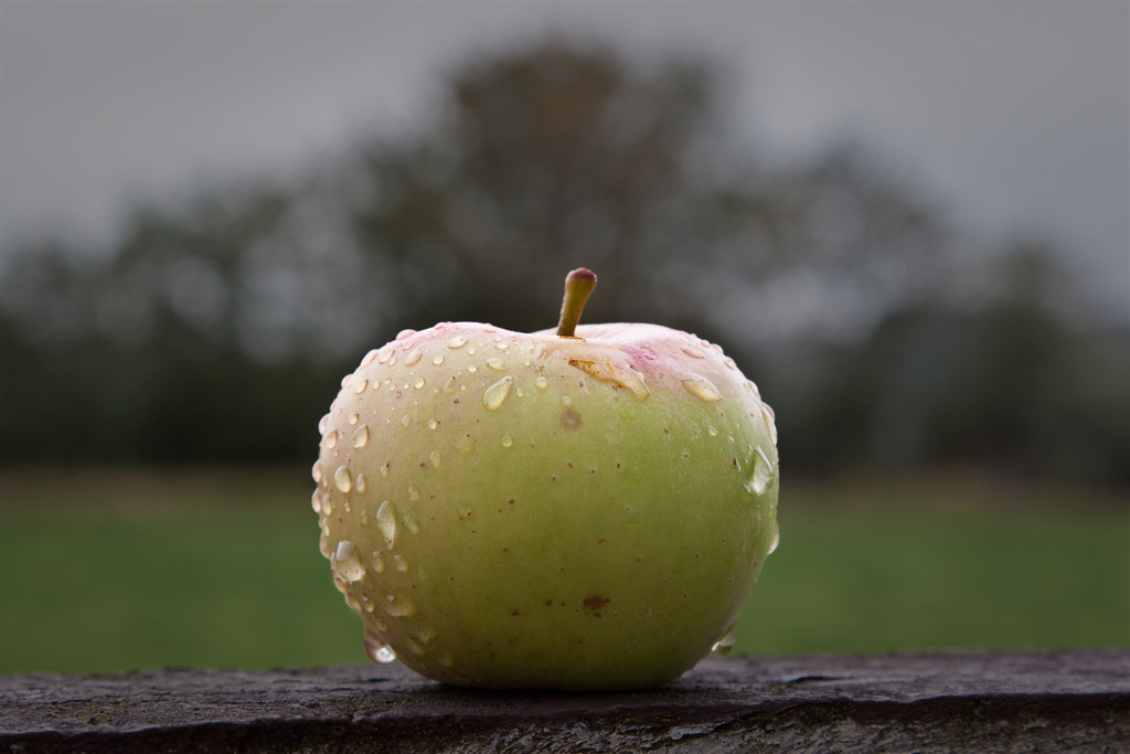 Rain on apple