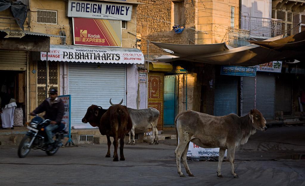 Early morning traffic, Jaisalmer