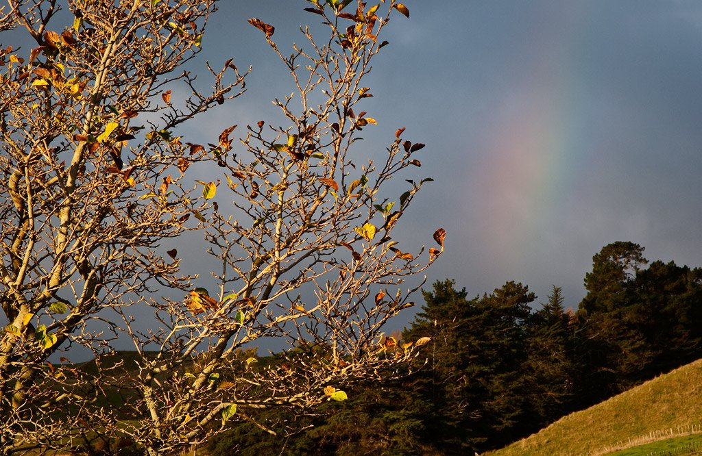 Autumn rainbow, Pohangina Valley