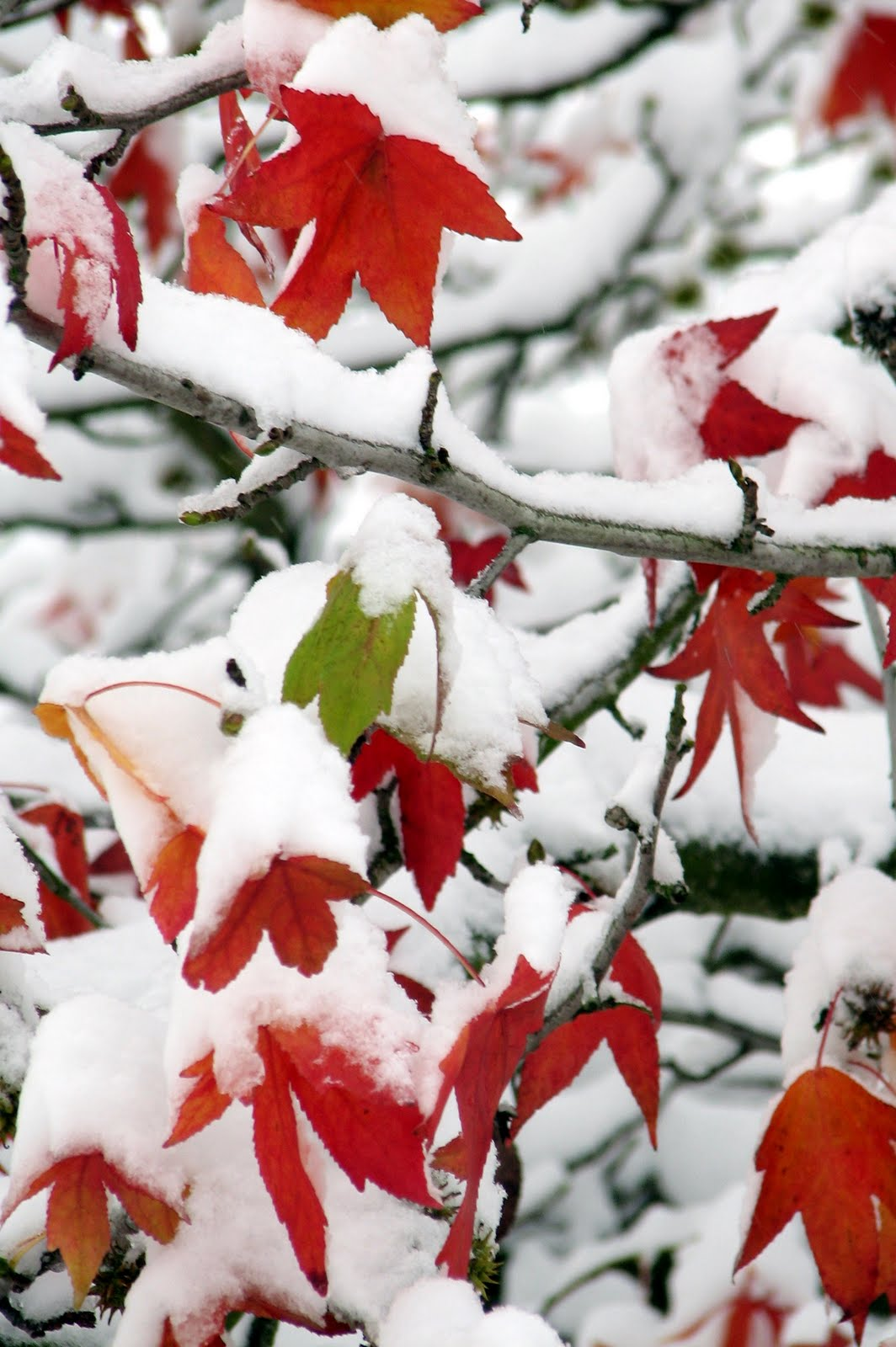Maple Leaf Pathway Beautiful: Within The Kitchen: A Little Canadian Blog... Please And