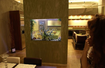 fish aquarium design