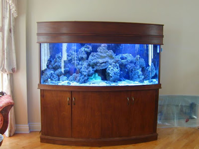 50 Beautiful fish aquarium designs - Kerala home design and floor ...