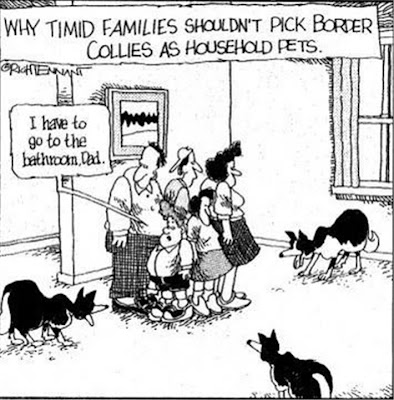 DeltaBluez Stockdogs: More Border Collie Cartoons
