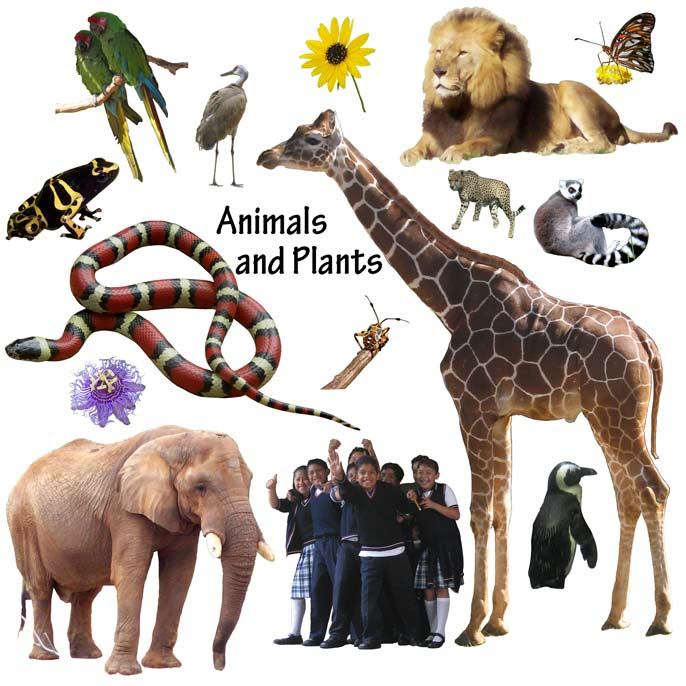 animals different animal growth physical characteristics learning changes science wacky grade