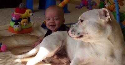 sharon avnon: The Nanny Dog