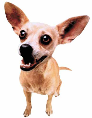 taco bell chihuahua name 10 most famous animals from hollywood 1043