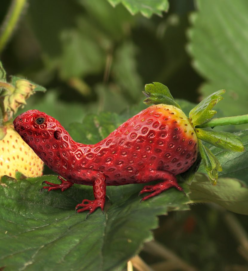 Lizard Strawberry by Pac0daTac0
