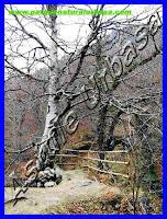 Nº 6 Haya Centenaria de tres Troncos y Mirador. Reserva Natural del Río Urederra. Parque Natural Urbasa. Ruta de las Cascadas desde Baquedano, Centro de Turismo Rural y Agroturismo  Casa Rural Navarra Urbasa Urederra. Ven a conocernos… te sorprenderás