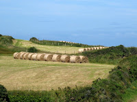 Hay bales in fields in Wales