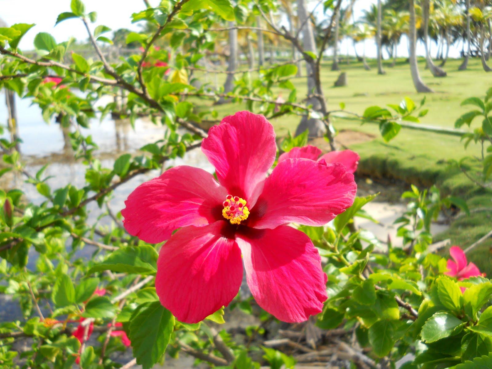 Sweet Garden Escapes: Flora of Panama