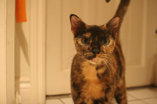 Craigslist Cat Found - Year of Clean Water