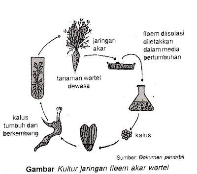 Biology Learning: B. BIOTEKNOLOGI KLONING DAN REKAYASA